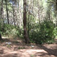 """Camping abusivo, la Polizia provinciale """"libera"""" una pineta"""