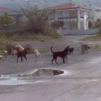 """Troppi randagi, una turista al Messaggero: """"Mai più nel Salento"""""""