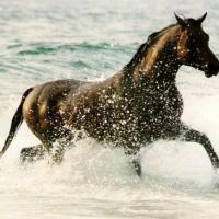 Tra le bellezze naturali dei Laghi Alimini, in sella a un cavallo