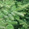 La Puglia all'insegna di un Natale più verde?