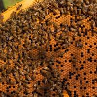 Botrugno, consuntivo della Fiera del Miele