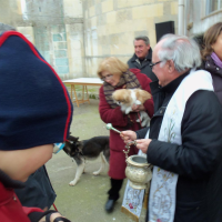 Maglie, la tradizionale benedizione degli animali