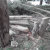 Conifere abbattute in rione Immacolata: c'è chi dice no