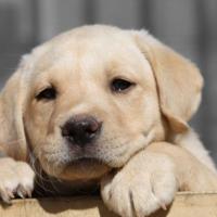 Investe cucciolo e ne provoca la morte: autista multato