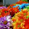 Colorare con i fiori a Otranto