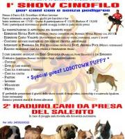 Mostra di cani da presa a Muro Leccese